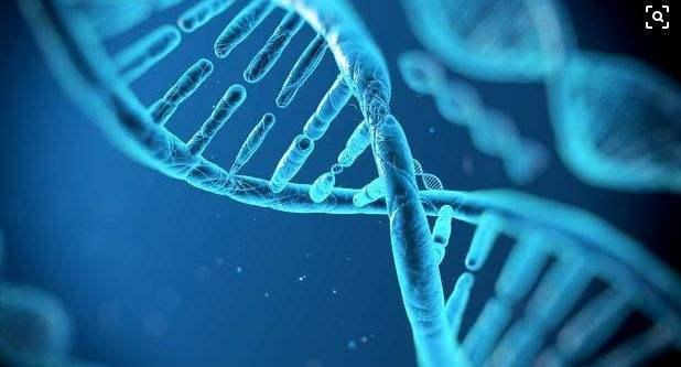 棉花优质纤维基因组的发现将有望改良棉花质量