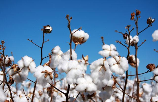 中纺棉:利用期货工具 稳定经营利润