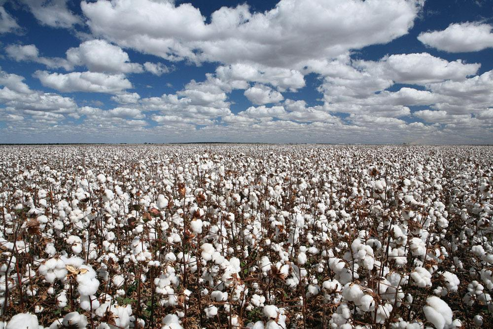 国内产不足需奠定棉花长线上涨基调
